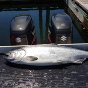 19-pound-chinook-salmon