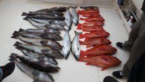 salmon-cod-fishing-spring-time
